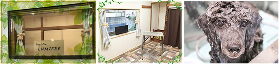 千葉県八千代市にあるアットホームなドッグサロンのリュミエールです。犬ちゃんにストレスなくカットやシャンプーを行います。